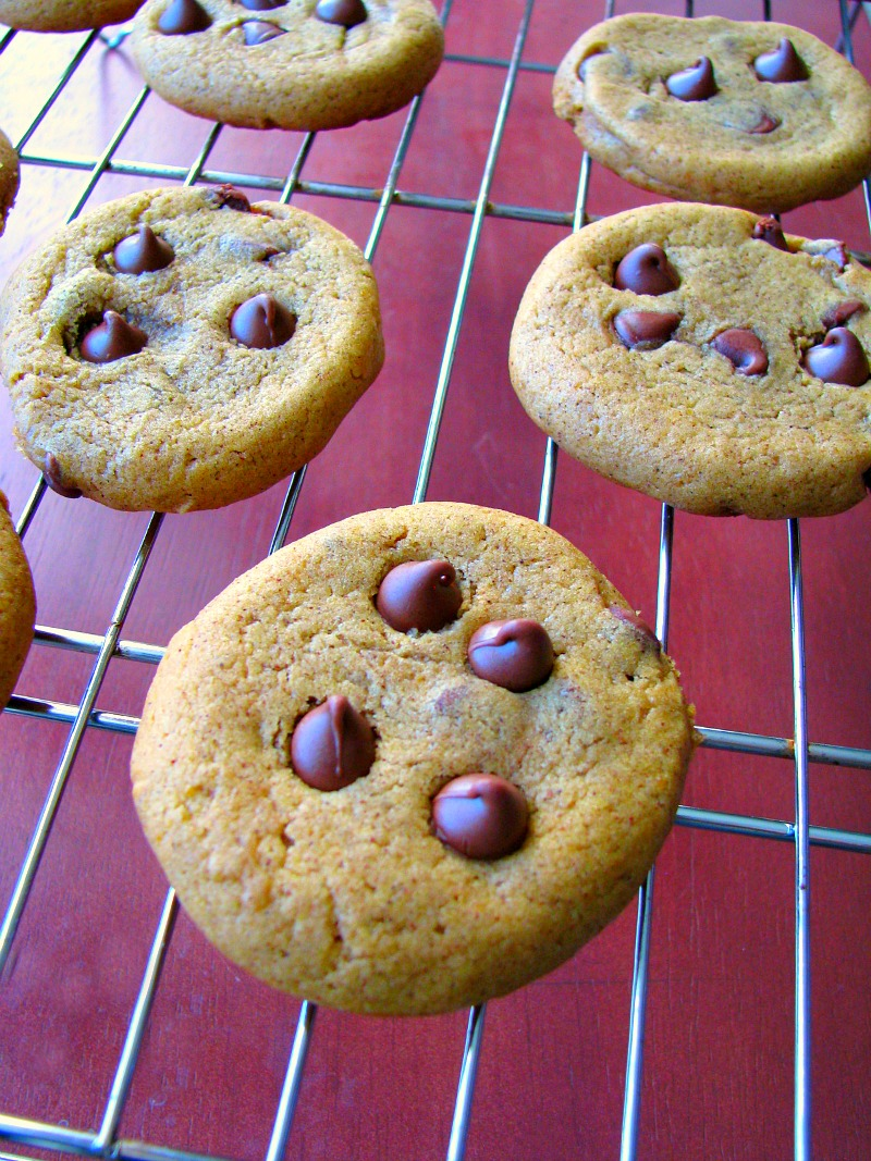 Chewy chocolate chip cookies with a subtle pumpkin flavor, these Chewy Pumpkin Chocolate Chip Cookies are a seasonal favorite!